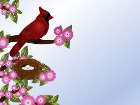 foto of cardinal-bird  - Red male cardinal bird on pink flowering tree with nest - JPG