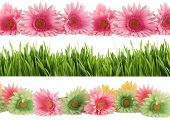 stock photo of daisy flower  - Set of three different borders of green grass and colorful gerber daisies - JPG
