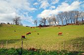 stock photo of bestiality  - A view of the Limousin in france - JPG