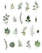 Vector Designer Elements Set Collection Of Green Eucalyptus, Art Foliage Natural Leaves Herbs In Wat poster
