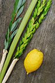 stock photo of sukkot  - The Four Species - JPG