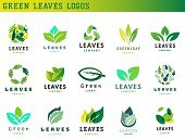 Green Leaf Eco Design Element Icon Friendly Nature Elegance Symbol And Decoration Floranatural Eleme poster