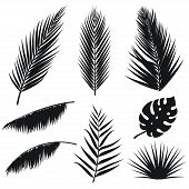 Vector Tropical Palm Leaves Silhouette Set Isolated On White Background. Summer Exotic Flora. Jungle poster