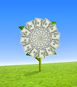 stock photo of paysage  - Concept of a sun flower with dollar bill leaves - JPG