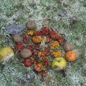 Discarded Frozen Fruits And Vegetables, Outdoor Close-up poster