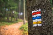 Marking The Tourist Route Painted On The Tree. Travel Route Sign. Season Of The Autumn With Sunrays  poster