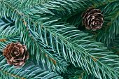Christmas Decoration Background. Christmas Wallpaper With Pine Leaves, Pine Cones In Top View Flat L poster