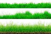 Green Grass Border Isolated On White Background.the Collection Of Grass. (manila Grass)the Grass Is  poster