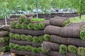 Pieces Of Sod Covering Dirt To Make Lawn. Stack Of Turf Grass Rolls For Landscaping poster