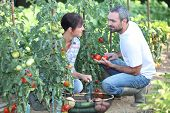 Couple picking vegetables