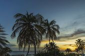 Gorgeous Colorful View Of Sunset On Curacao Island. Gorgeous View Of Green Palm Trees On Blue Sky Ba poster
