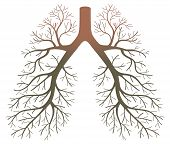 pic of respiratory disease  - lung patients after smoke on a white background - JPG