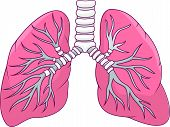 stock photo of pipe organ  - Vector illustration of Human lung cartoon isolated on white background - JPG