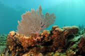 stock photo of oceanography  - Underwater seascape with focus on sea fan and coral - JPG