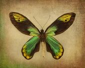Vintage background with green butterfly
