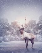 pic of snow forest  - Reindeer standing in the snow - JPG