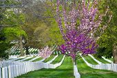 picture of arlington cemetery  - Arlington National Cemetery in Spring  - JPG