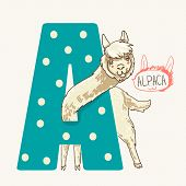 picture of lamas  - alphabet letter A - JPG