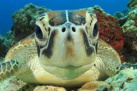 stock photo of ecosystem  - Cute Sea Turtle face - JPG