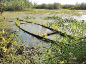 foto of hydrophytes  - recess of pond with waterlogged wooden boat - JPG