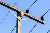 picture of wasp sting  - Wasps in the nest on the electrical line  - JPG