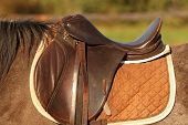 stock photo of girth  - traditional saddle mounted on a brown mare - JPG
