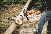 foto of man chainsaw  - Man cuts tree with chainsaw - JPG