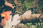 picture of man chainsaw  - Man cuts tree with chainsaw - JPG