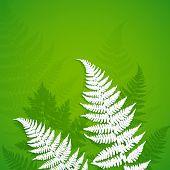 image of fern  - White vector paper fern leaves on green background - JPG