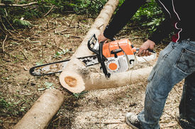 stock photo of man chainsaw  - Man cuts tree with chainsaw - JPG