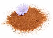 picture of chicory  - A pile of instant chicory and a chicory flower isolated on a white background