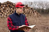 image of lumber  - Young lumber engineer standing with notebook in front of cut trunk stock