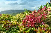 pic of crotons  - Garden with various tropical plants and flower growing in a pattern - JPG