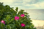 pic of hot-weather  - Sea coast in the spring in hot weather - JPG