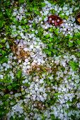 image of hail  - Balls of hail on the grass in the summer after the storm - JPG