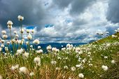 stock photo of grass area  - fluffy grass in the mountains and blue sky with clouds - JPG