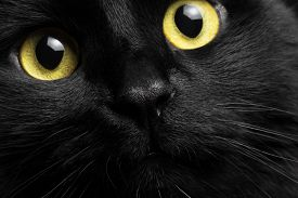stock photo of animal eyes  - closeup black cat curiosity looking in camera, very cute cat with yellow eyes ** Note: Shallow depth of field - JPG
