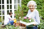 image of granddaughter  - Portrait Of Teenage Granddaughter Helping Grandmother In Garden - JPG