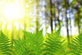 stock photo of fern  - Fern leaf  in the forest - JPG