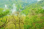 image of rain clouds  - Clouds above the mountain forest after rain - JPG