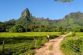 picture of french polynesia  - Female tourist cycling on a dirt road with Rotui mountain in the background on the tropical island of Moorea near Tahiti in French Polynesia - JPG