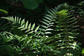 stock photo of cognitive  - Fernery in Cognitive track of Varnikai botanical - JPG