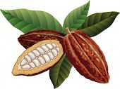 picture of cocoa beans  - Cocoa beans with green leaves - JPG