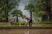 Father And Son In Rice Field,dad And Son This Is Lifestyle Of Family Farmer At Rural Asia. Tradition poster