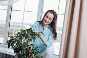 Young Housewife Rubs Green Leaves Of Indoor Plants, Care For Flora, Botany. poster