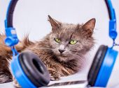 Fluffy Cat Near The Headphones. Listen To Your Favorite Music Using Your Phone And Headphones poster