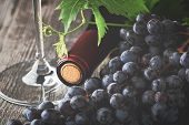 Red Wine Grapes Basket/ Dark Grapes/ Blue Grapes/ Wine Grapes/ Red Wine Bottle poster