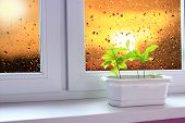 Saplings Of Oaks On Window-sill Of Balcony And View To Evening Sky. Landscape With Sunset Seen From  poster
