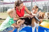 Family washing dog in pool of animal shelter taking care and playing with the animal  poster
