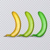 Set Of Three Bananas, Ripe, Medium Ripe And Not Ripe, Vector Eps 10 Illustration poster